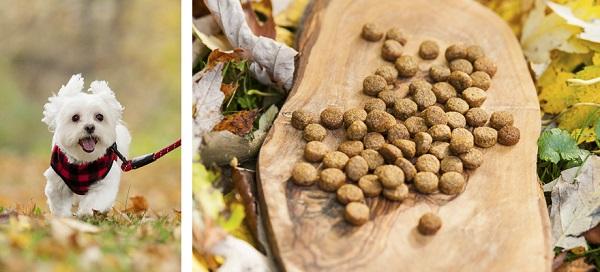 Alice G Patterson Photography-Pinnacle-Maltese running Pinnacle dog food