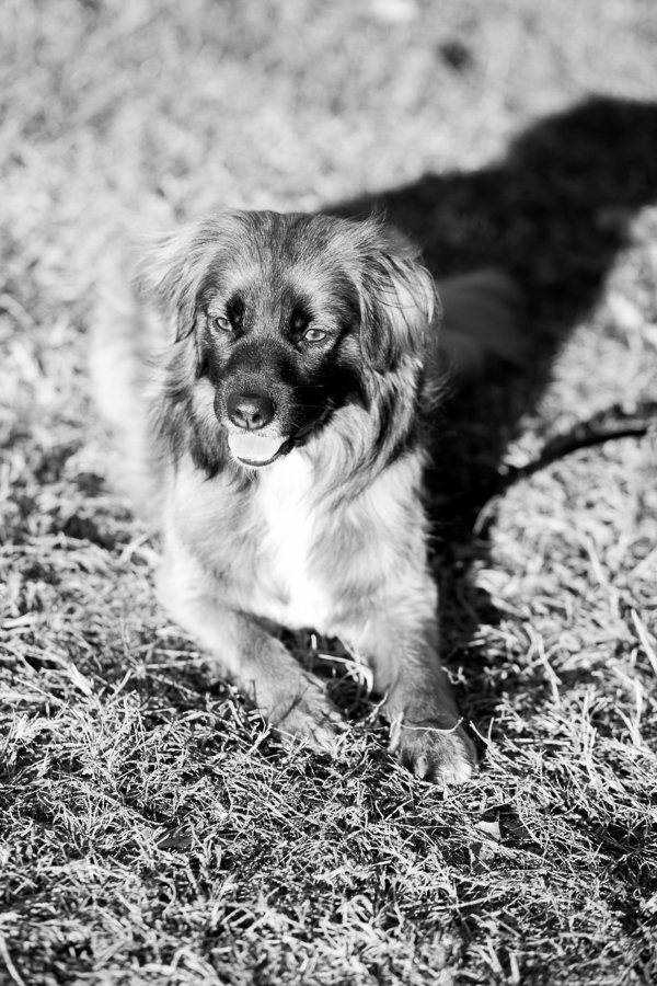 © Bethanne Arthur Photography | mixed breed, black-white-dog-photography