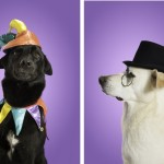 dogs-in-hats, studio-photography