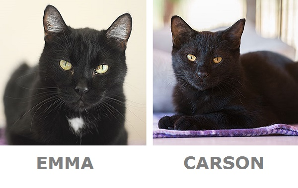Emma & Carson-adoptable cats-Best Friends Animal Society