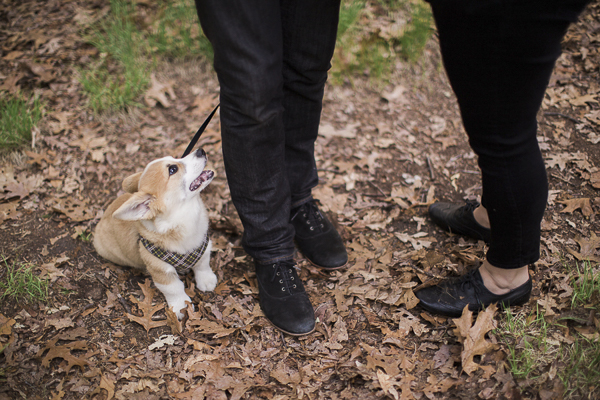 Fall-engagement-photos-with-Corgi-puppy