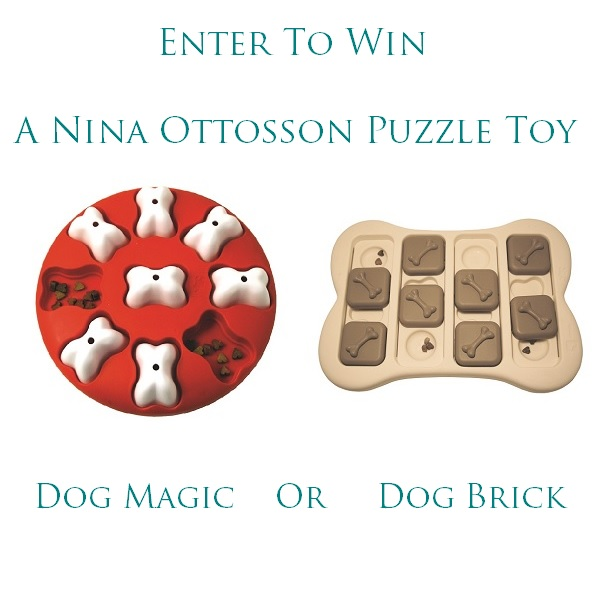 Nina Ottosson Puzzle Toy-dog brick or dog magic
