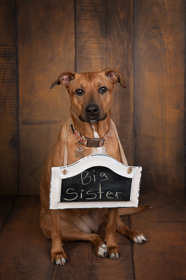 © Cathy Murai Photography, dog with big sister sign