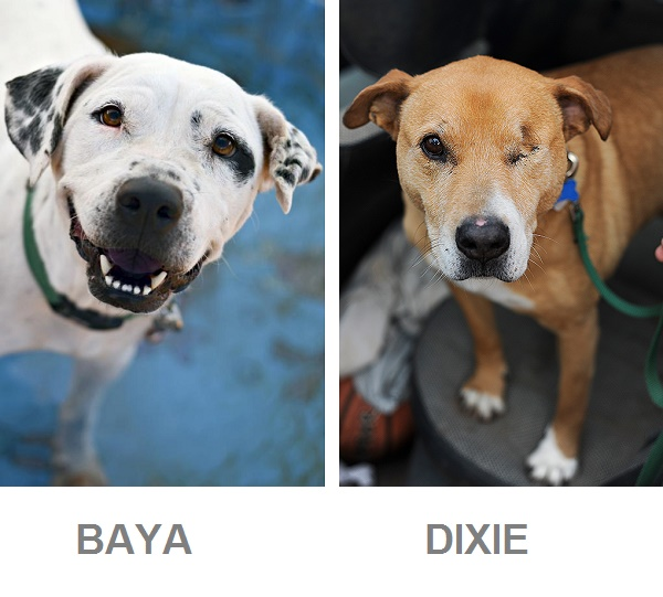 adoptable senior dogs from Best Friends Animal Society