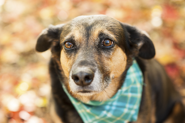 © Alice G Patterson Photography | mixed breed dog, Syracuse lifestyle dog photographer
