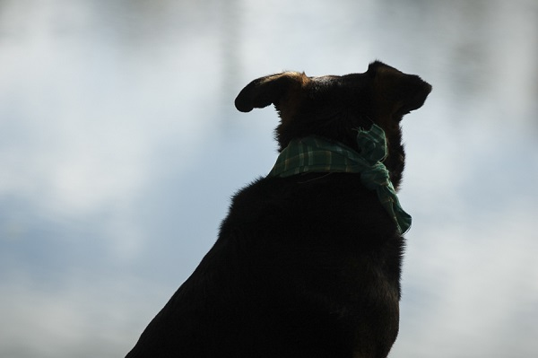 © Alice G Patterson Photography | mutt looking at river, canine DNA testing