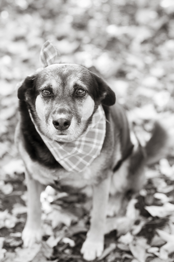 © Alice G Patterson Photography | Syracuse dog photography, fall dog photos