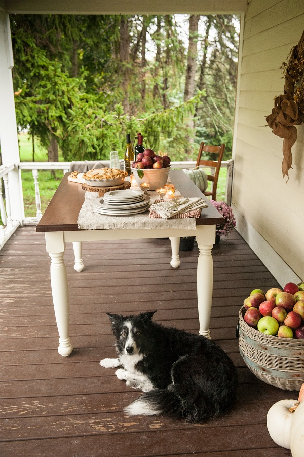 Border Collie-Fall-Apple-Pie-Dessert-Table-By-Teaselwood-Design, Syracuse, Photography for small business