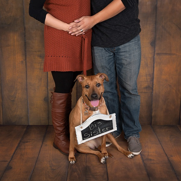 "© Cathy Murai Photography | dog with ""big sister"" sign, dog announcing human's pregnancy,"