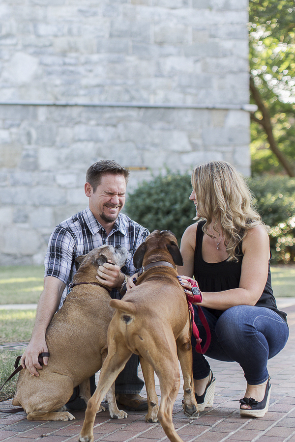 © Heidi Calma Photography | Boxers, engagement photos with dogs
