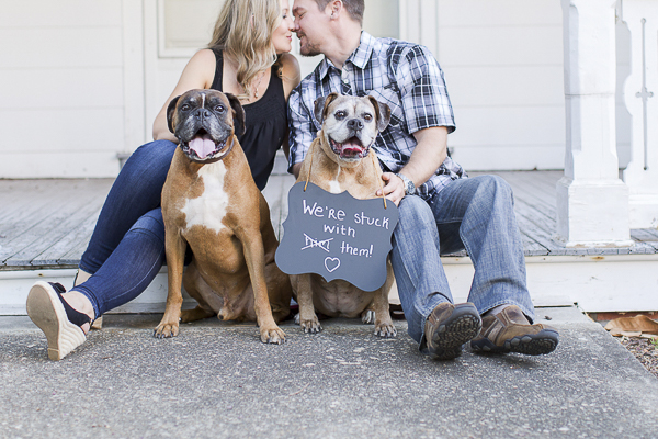 "© Heidi Calma Photography | Boxers ""we're stuck with them"" sign, engagement photos with dogs, dog dynamic duo"