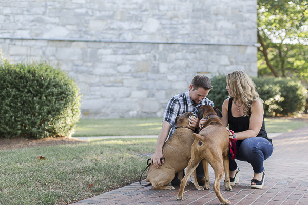 © Heidi Calma Photography | Boxers, engagement pictures with dogs