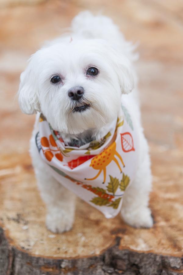Why We Choose Petsmartgrooming Daily Dog Tag