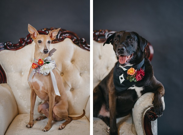 Wedding-Dogs | Rowdy&Enzo-Regina As The Photographer, ihow to nclude a dog in wedding plans