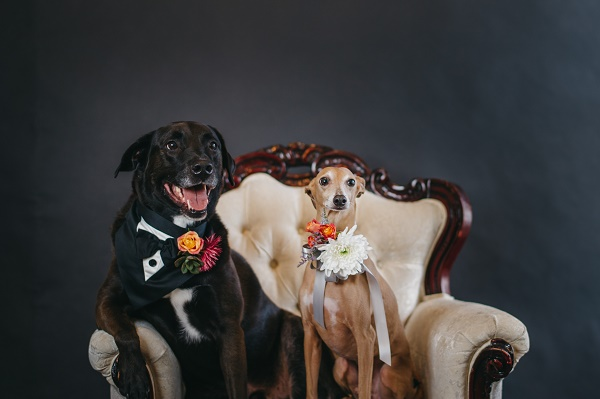 © Regina As The Photographer | Wedding Dogs, how to make dogs part of the big day, best dogs, dogs in wedding florals
