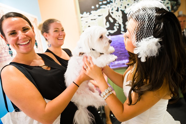 bride kissing dog, pet sitters during wedding