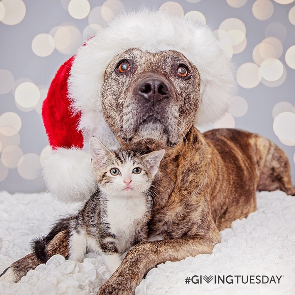 Pawsitively Amazing:  Giving Tuesday
