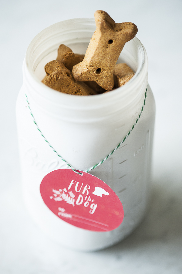 Daily Dog Tag-easy DIY upcycle treat jar, Syracuse commercial photography