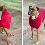 Laurentina Photography Walter-Boxer mix red sweater