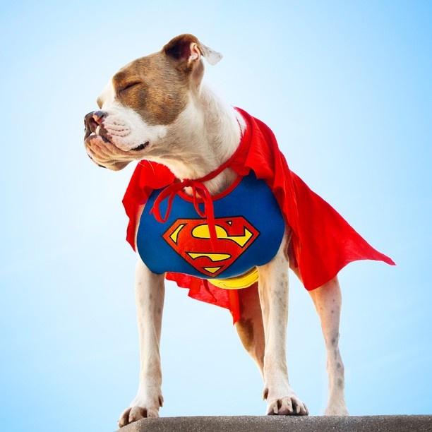 Puka-Superdog