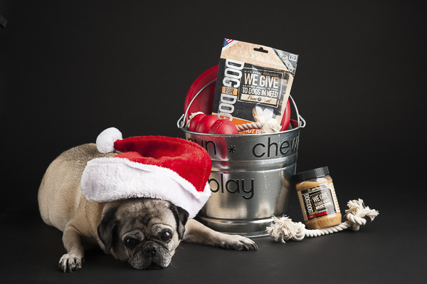 Santa Paws, Pug in Santa Hat, dog shelter donations, dog toys and treats on black background, studio pet photographer