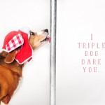 Beagle-Christmas-Story
