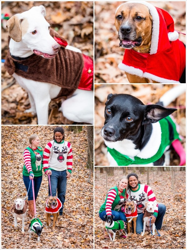 Christmas photos with dogs, family holiday portrait, Santa Boxer, terrier elf, mutt reindeer, Pug Christmas sweater