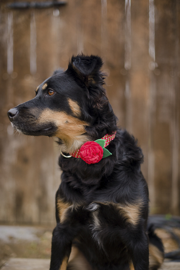red flower collar, bloom dog collar from Bone & Bow Tie