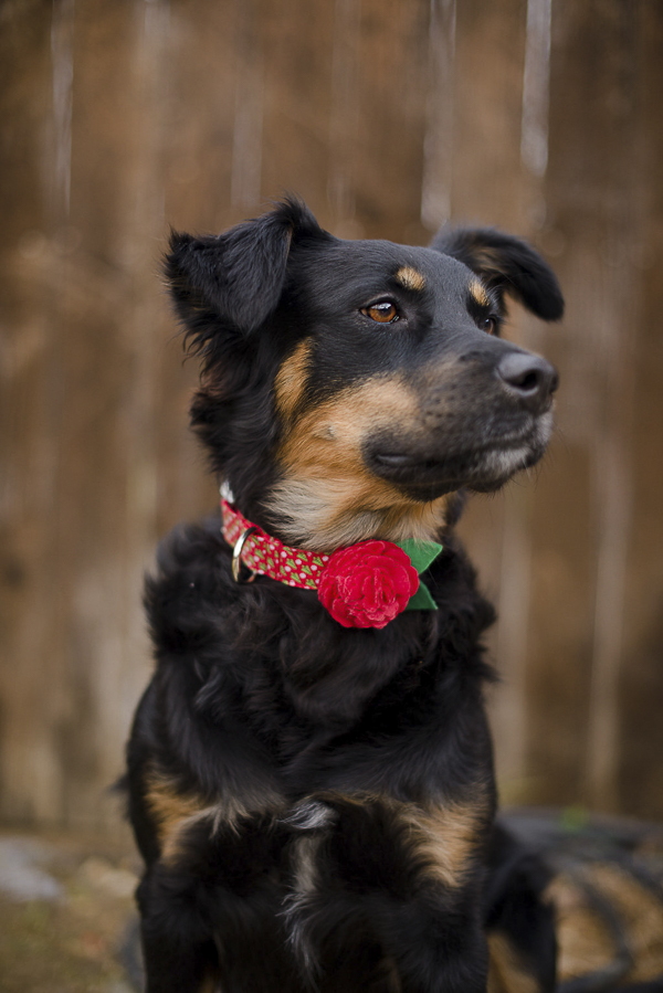red bloom dog collar from Bone & Bow Tie