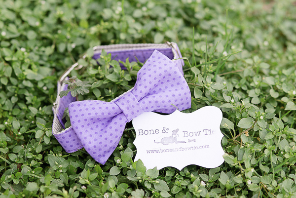 purple dotted Bone & Bow Tie dog collar