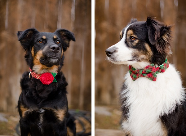 Christmas Floral collar and bow tie
