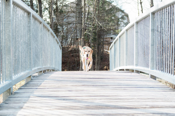 © Elska Productions | dog crossing bridge