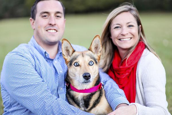 Blue eyed dog, shepherd-Husky mixed breed
