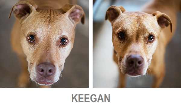 Adoptable Keegan from Best Friends Animal Society