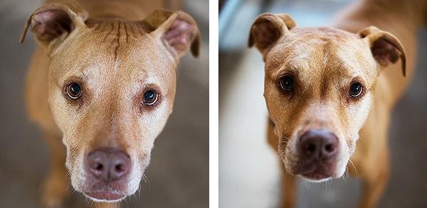 Best Friends Animal Sanctuary Dogs