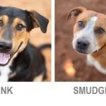 Link & Smudge-Best Friends