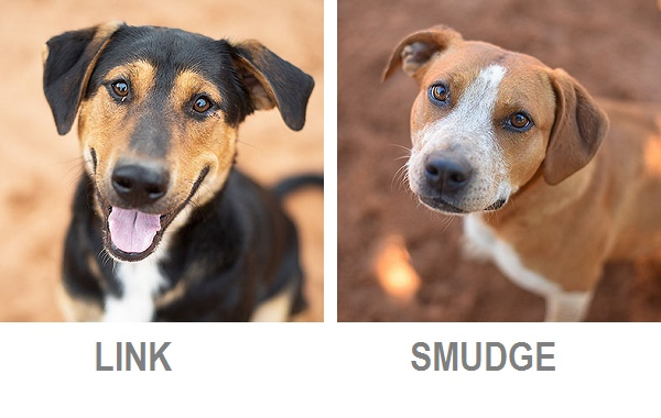 Link & Smudge-Best Friends, Adoptable dogs