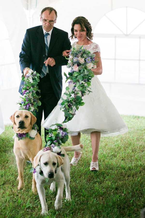 Loree Photography-Wedding Dogs-Yellow Labs floral leash-walking bride down aisle, wedding