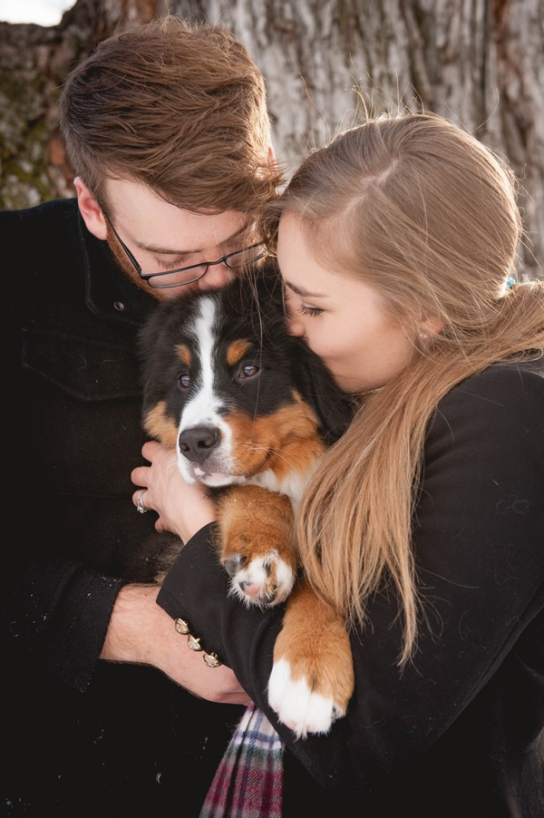 Bernese Mountain Dog puppy kisses