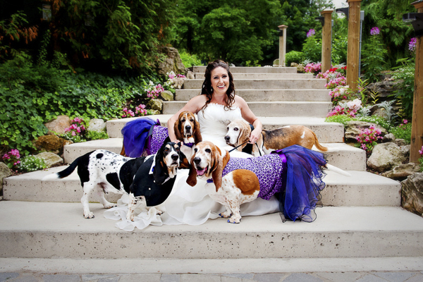 Basset Hound Wedding Party, bride and Basset Hounds, purple leopard dog dresses
