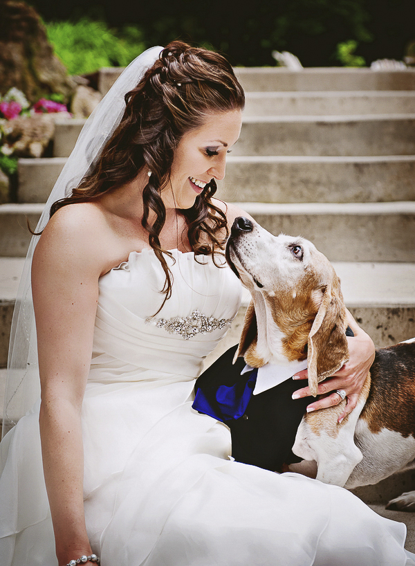 Bride, Basset Hound, dog in tux, Best Wedding dog