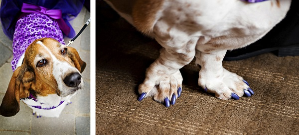 Basset Hound Wedding Party-painted toenails-dog