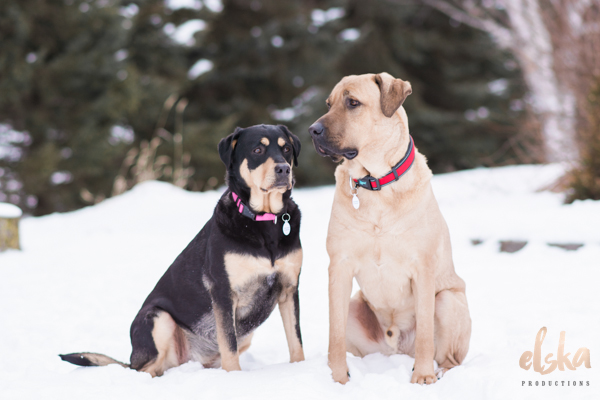Adopt Me:  Harley and Darcy