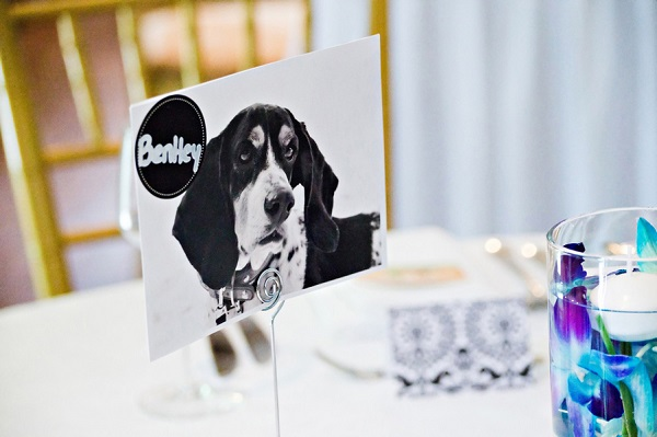 creative way to have dogs at wedding, dog photo table number