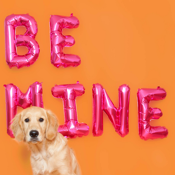Puppy love, Golden Retriever pup studio photography session, orange background, pink letters