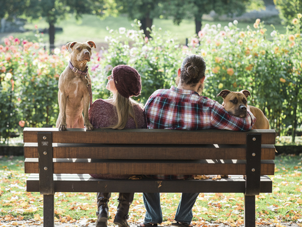 Pit bull family sitting on park bench, on location pet photography