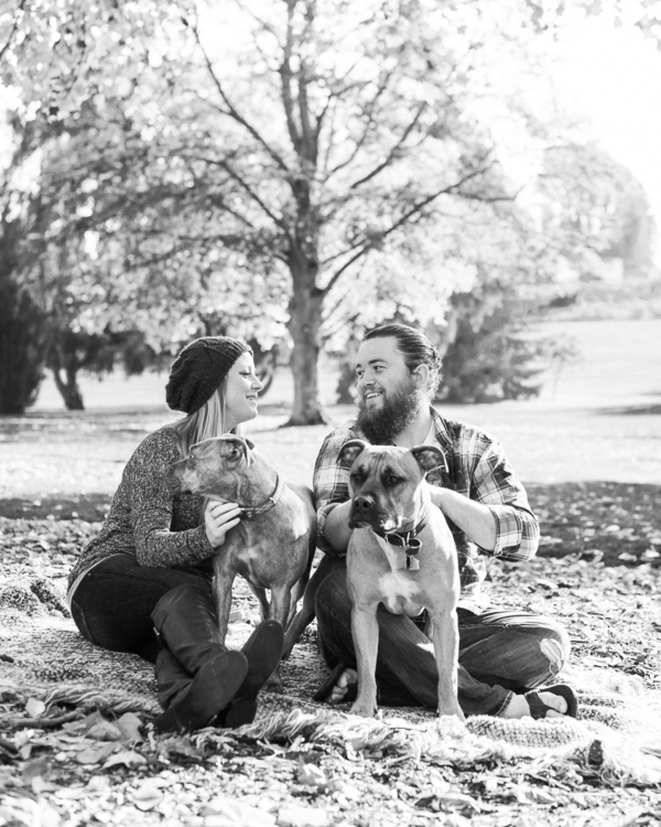 Pit bulls in park, on location dog photography, black white dog family portraits