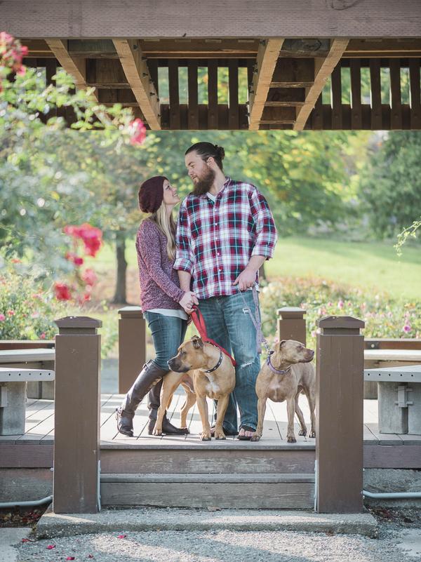 Family portrait, Pit bulls in park