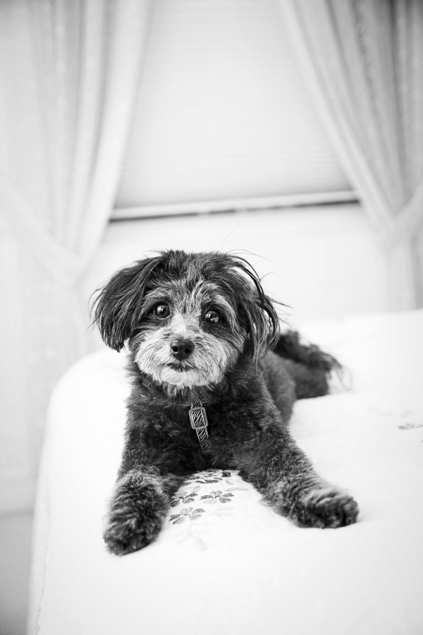 dog is girl's best friend, dog on bed, © Jessica Cobb Pet Photography