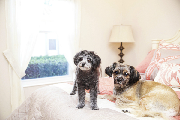 on-location-dog-portraits, sweet dog dynamic duo on bed